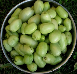 Green tomatoes: a multitude of possibilities