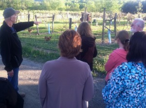 Owner Joe Messina give an evening tour of the vineyards