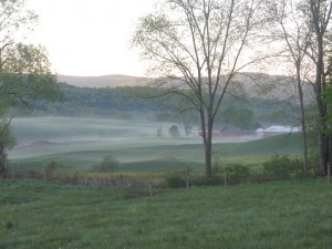The morning mist creeps into the valley on cat's feet